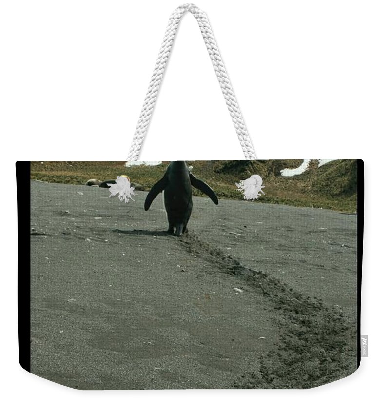 King Penguins Weekender Tote Bag featuring the photograph Penguin Travel Poster by Amanda Stadther
