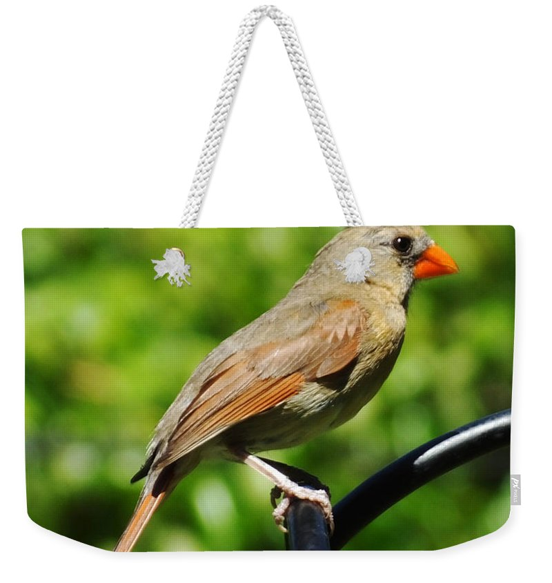 Female Cardinal Weekender Tote Bag featuring the photograph Perched Cardinal by Lizi Beard-Ward