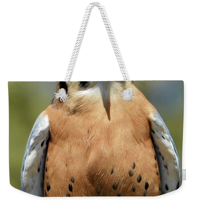 Nature Weekender Tote Bag featuring the photograph Peregrine Falcon by Paul Smith