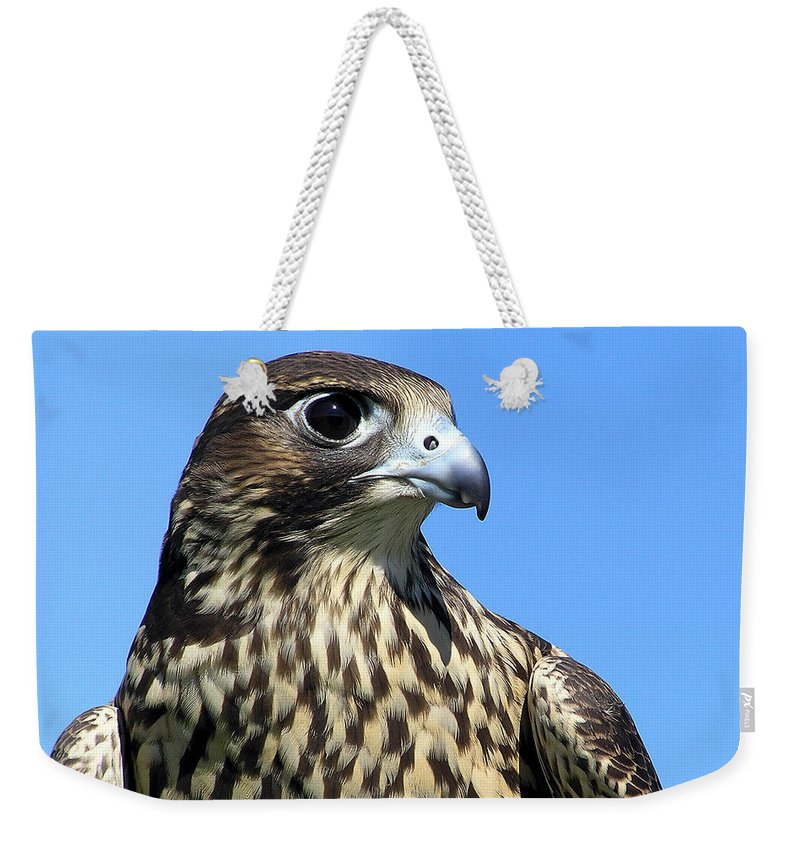 Peregrine Falcon Weekender Tote Bag featuring the photograph Peregrine Falcon by Christina Rollo