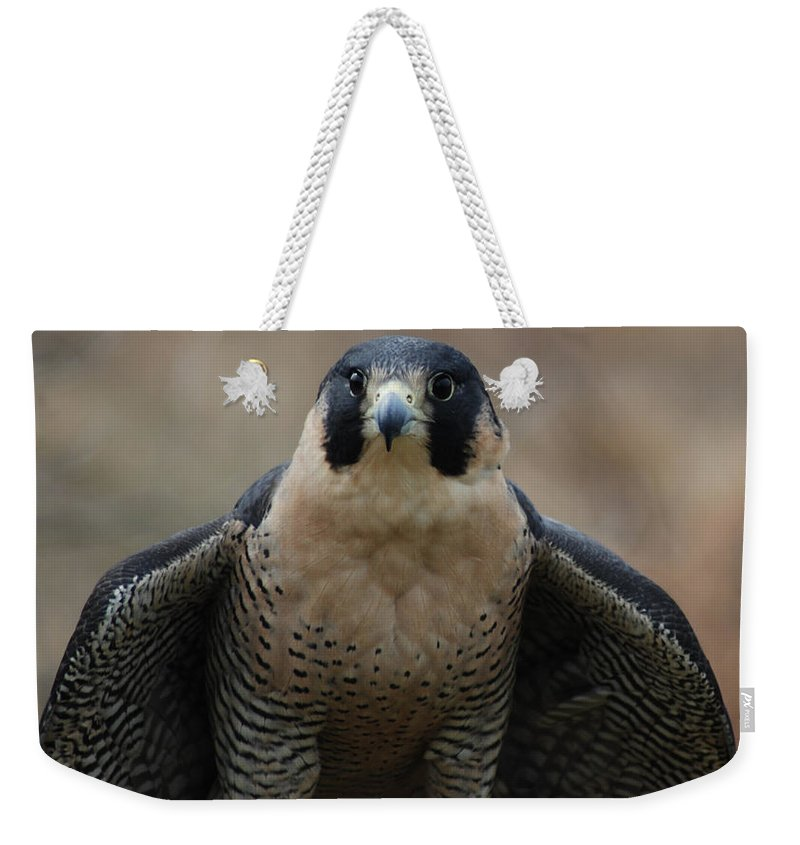 Falcon Weekender Tote Bag featuring the photograph Peregrine Falcon by Richard Bryce and Family