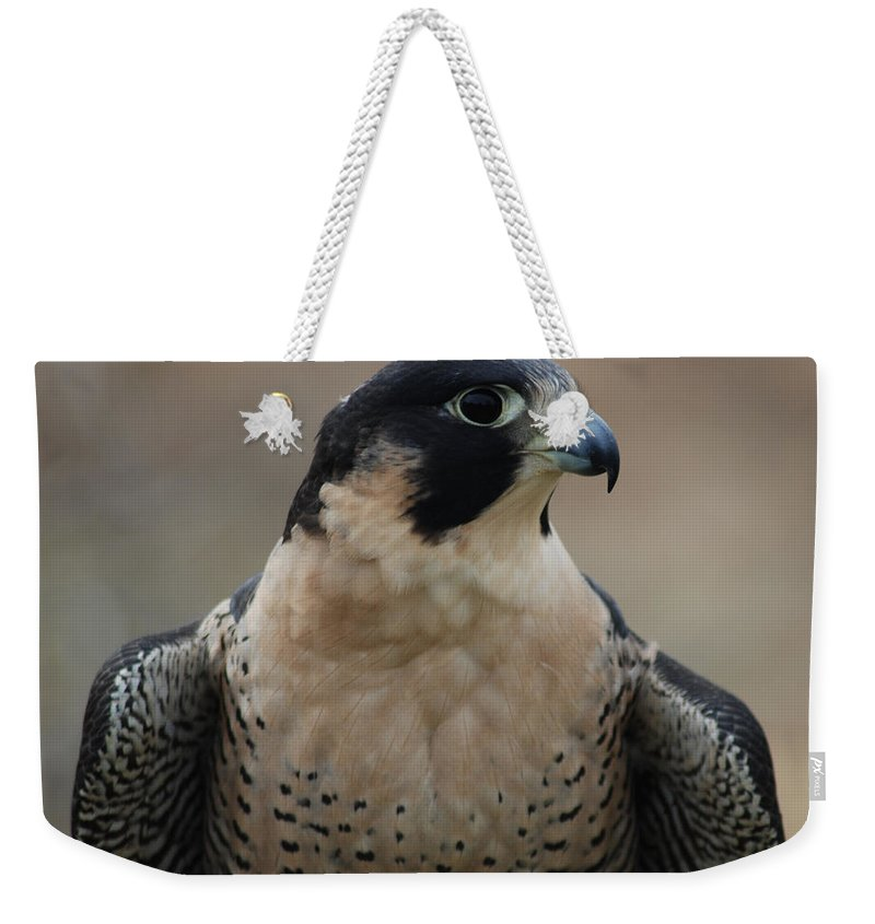 Profile Weekender Tote Bag featuring the photograph Peregrine Profile by Richard Bryce and Family