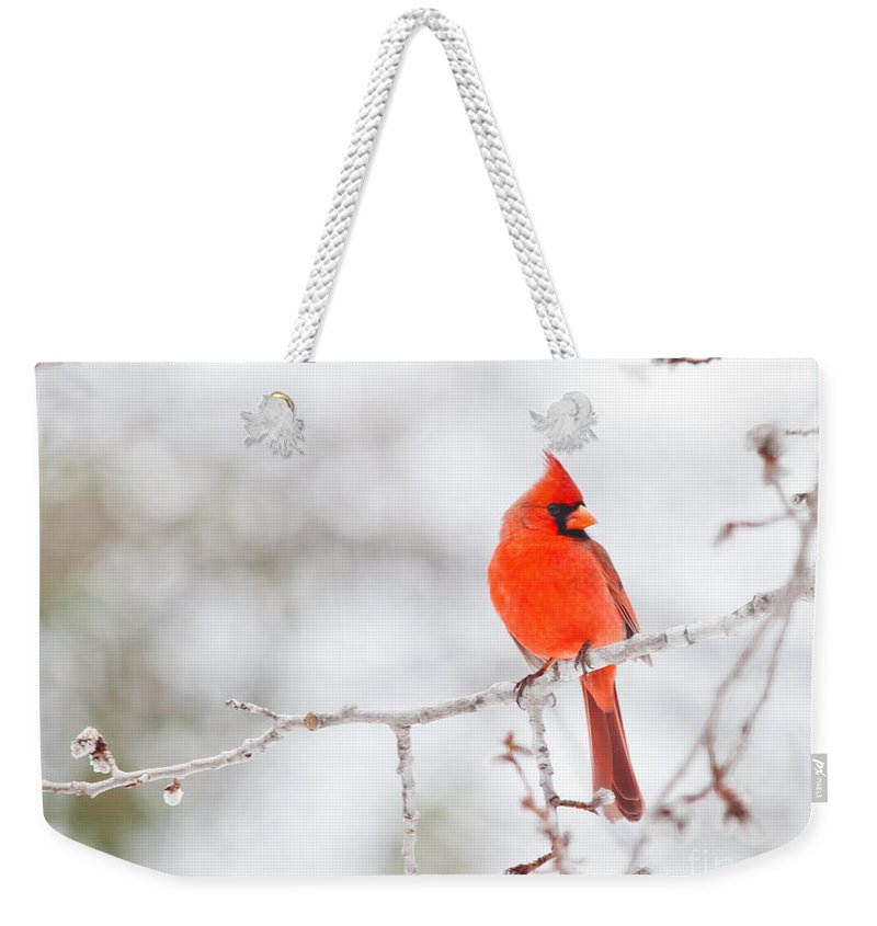 Weekender Tote Bag featuring the photograph Perfect Cardinal by Cheryl Baxter