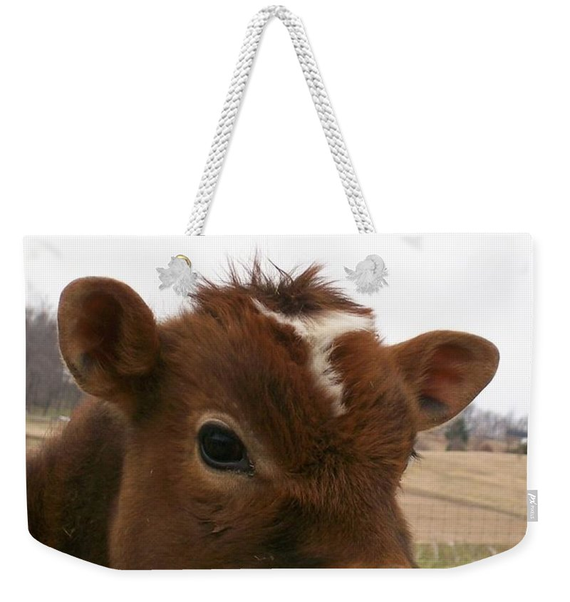 Cow Weekender Tote Bag featuring the photograph Perfect Stance by Sara Raber