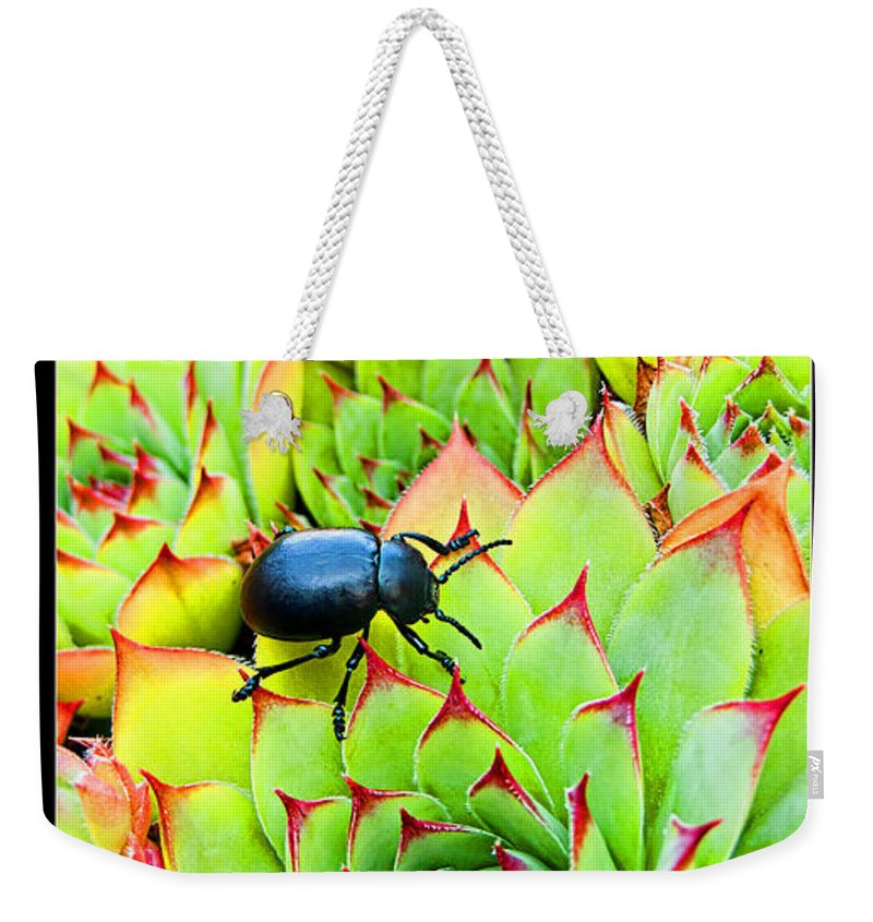 Persevere Weekender Tote Bag featuring the photograph Persevere I by Weston Westmoreland