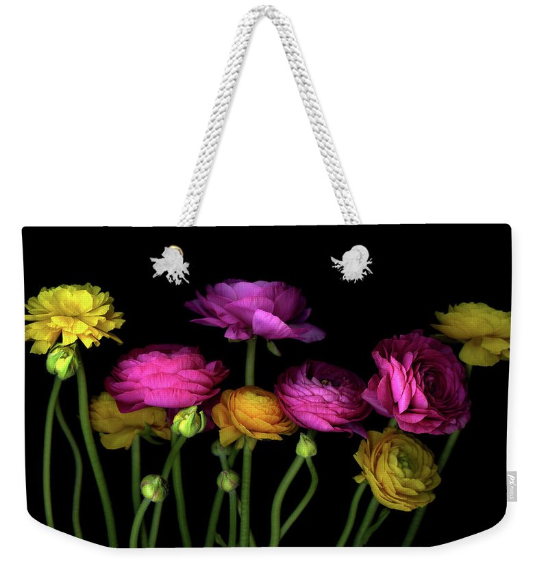 Black Background Weekender Tote Bag featuring the photograph Persian Buttercups Ranunculus Asiaticus by Photograph By Magda Indigo