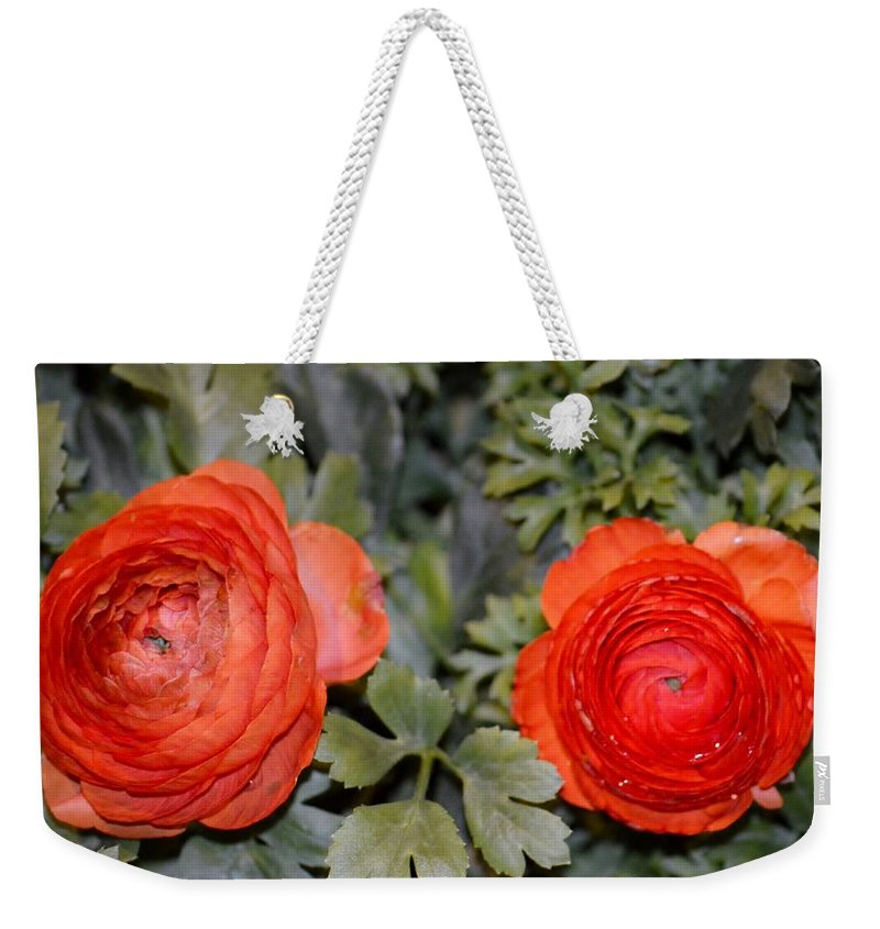Ranunculus Weekender Tote Bag featuring the photograph Persian Buttercups by Sonali Gangane
