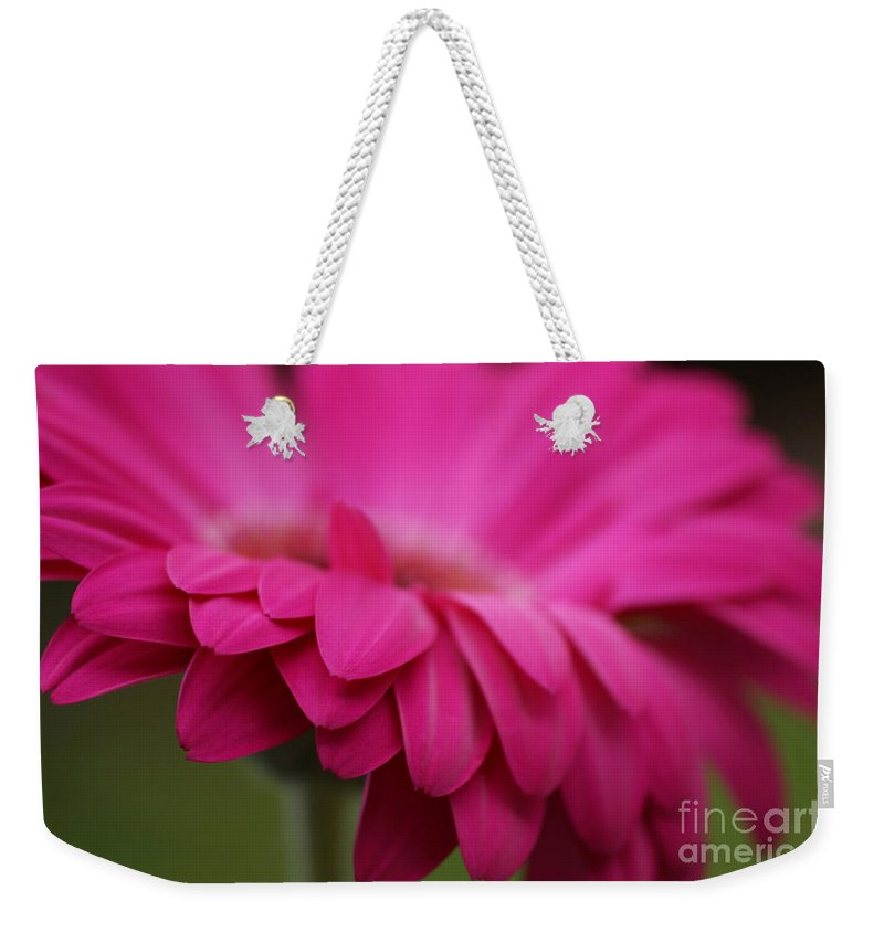 Pink Weekender Tote Bag featuring the photograph Petals Pink by Carol Lynch