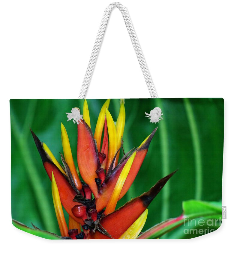 Photography Weekender Tote Bag featuring the photograph Petals Up by Jackie Farnsworth