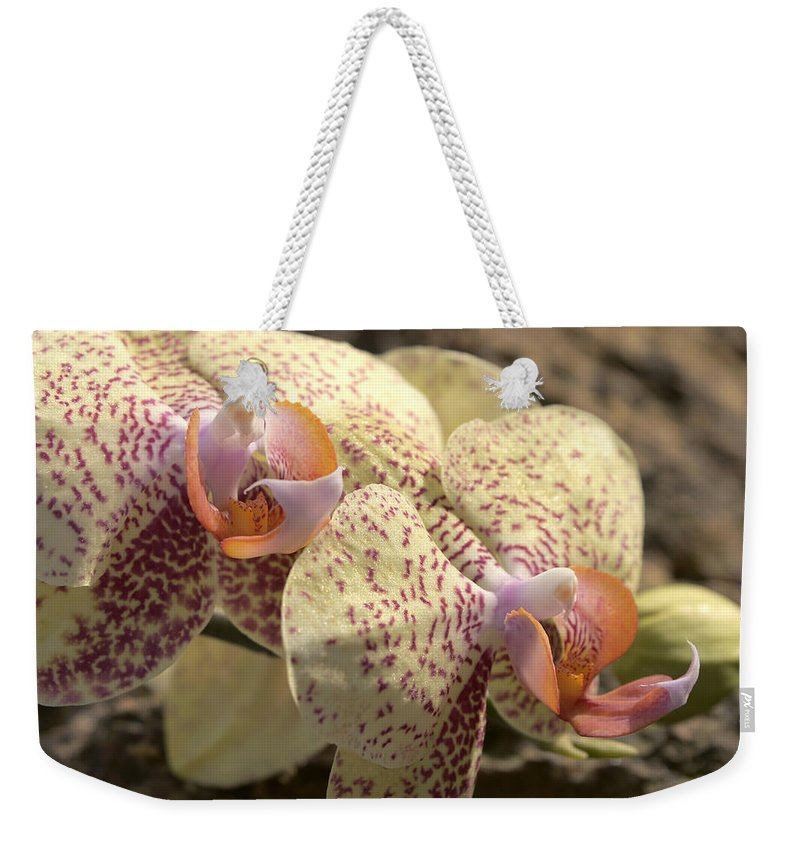 Orchid Weekender Tote Bag featuring the photograph Phal 4703 by Terri Winkler