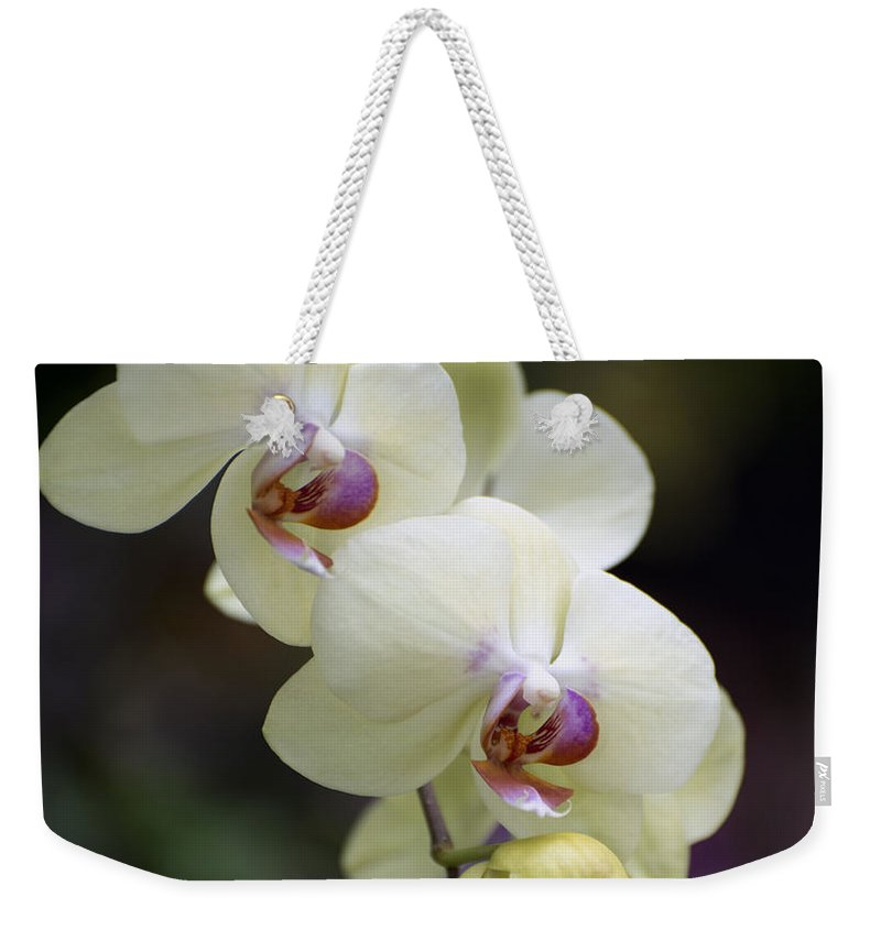 Yellow-green Orchid Weekender Tote Bag featuring the photograph Phal Ming Chao Dancer 0754 by Terri Winkler