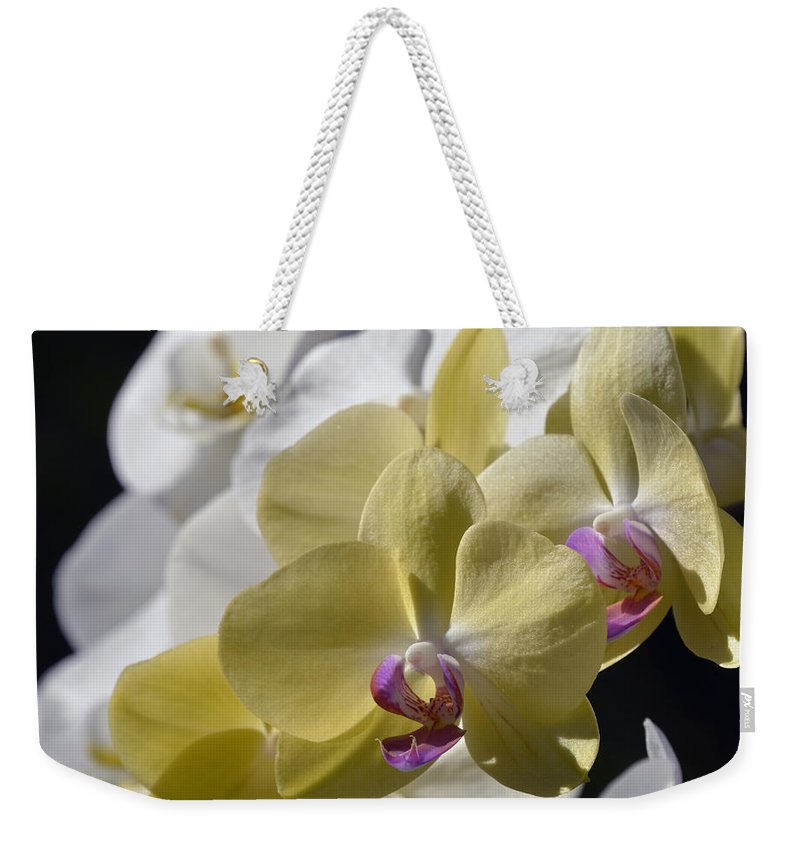 Orchid Weekender Tote Bag featuring the photograph Phalaenopsis Orchids 2777 by Terri Winkler