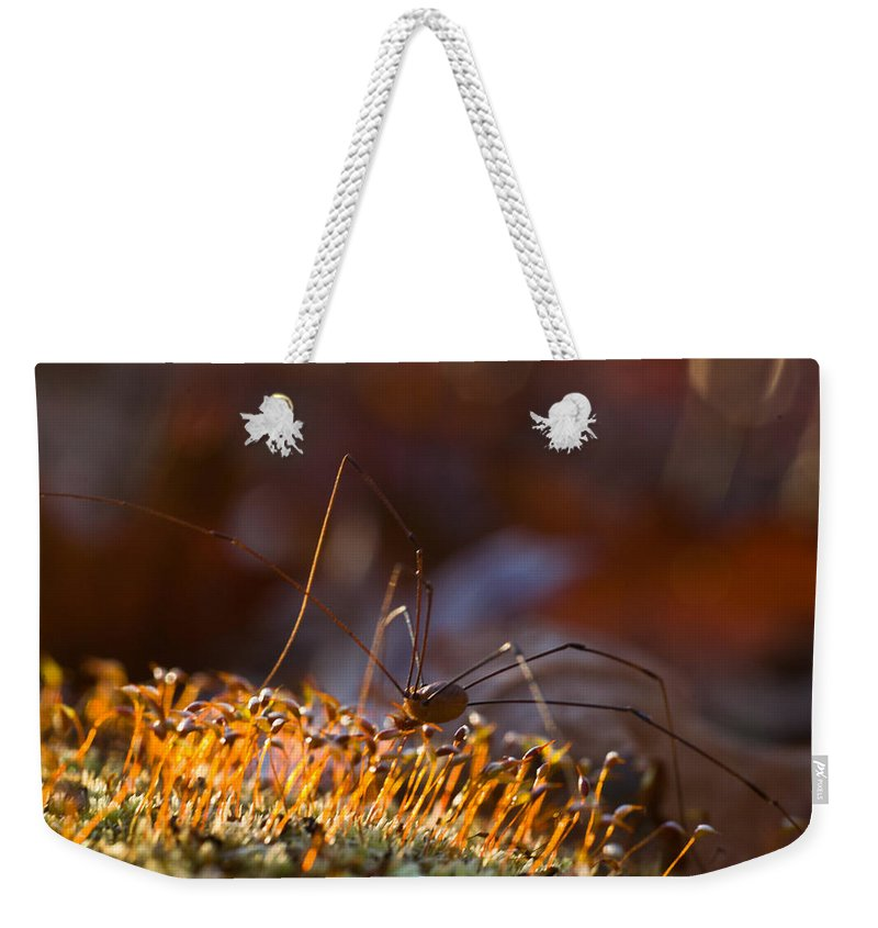 Phalangid Weekender Tote Bag featuring the photograph Phalangid Among The Moss Capsules by Douglas Barnett