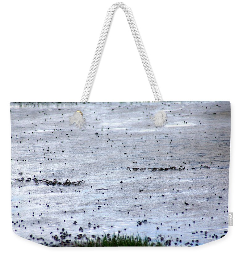 A Fiddler Crab Weekender Tote Bag featuring the photograph Pick A Side by Kim Pate