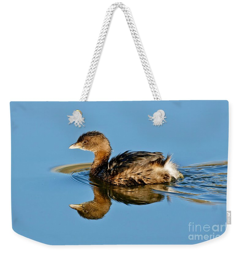 Pied-billed Grebe Weekender Tote Bag featuring the photograph Pied-billed Grebe by Anthony Mercieca