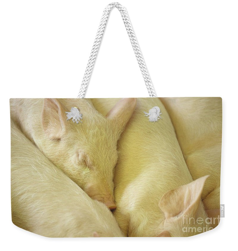 Natural World Weekender Tote Bag featuring the photograph Pigs Sleeping by Jim Corwin