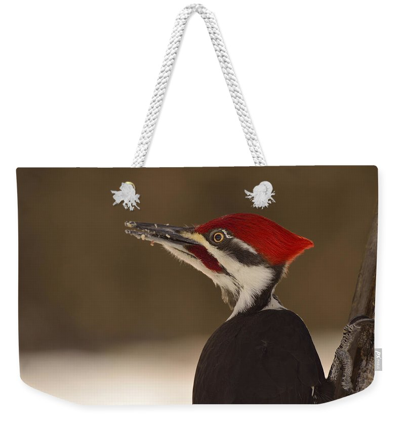 Pileated Woodpecker Weekender Tote Bag featuring the photograph Pileated Woodpecker by Joshua McCullough