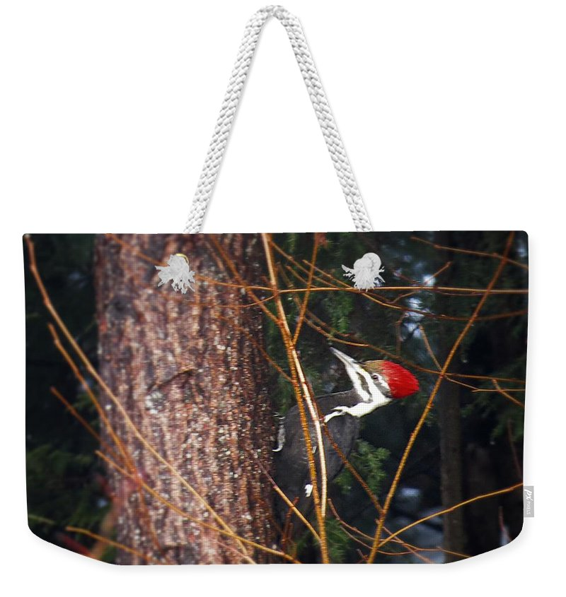 Weekender Tote Bag featuring the photograph Pileated Woodpecker by MTBobbins Photography