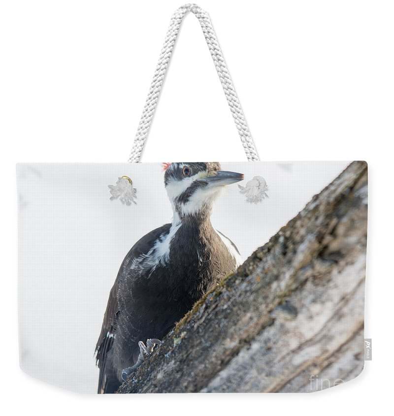 Stump Weekender Tote Bag featuring the photograph Pileated Woodpekcer by Cheryl Baxter