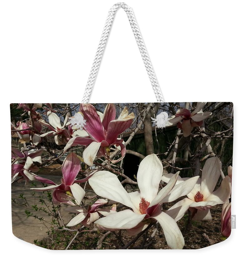 Pink Weekender Tote Bag featuring the photograph Pink And White Spring Magnolia by Caryl J Bohn