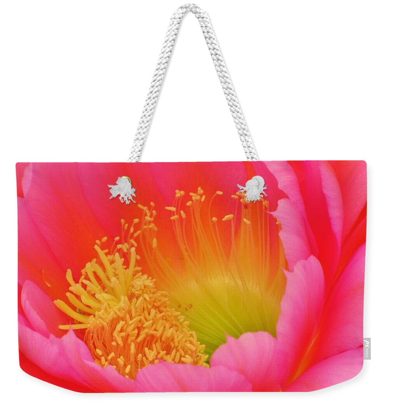 Cactus Flower Weekender Tote Bag featuring the photograph Pink And Yellow Cactus Flower by Michelle Cassella