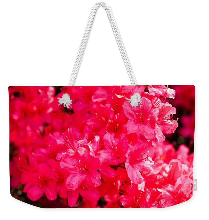 Nature Weekender Tote Bag featuring the photograph Pink Azalea's by Michael Porchik