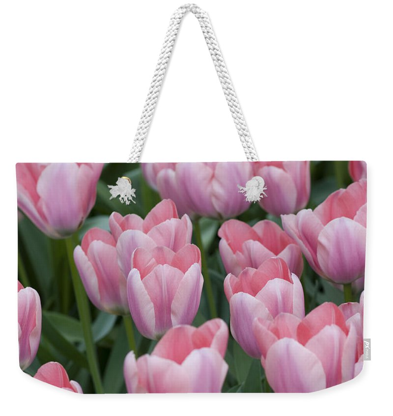 Pink Weekender Tote Bag featuring the photograph Pink Beauties by Juli Scalzi
