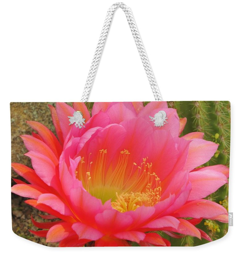 Cactus Flower Weekender Tote Bag featuring the photograph Pink Cactus Flower Of The Southwest by Michelle Cassella
