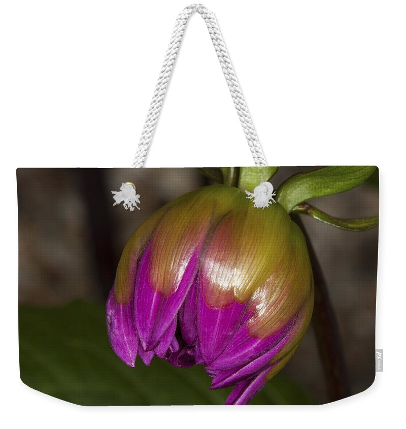 Beginnings Weekender Tote Bag featuring the photograph Pink Dahlia Bud by Diane Macdonald