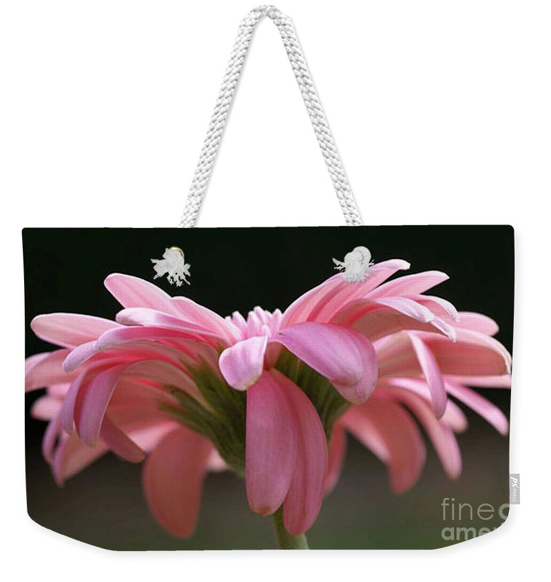 Pink Weekender Tote Bag featuring the photograph Pink Daisy 1 by Carol Lynch