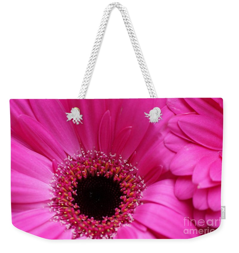 Pink Weekender Tote Bag featuring the photograph Pink Daisy by Carol Lynch