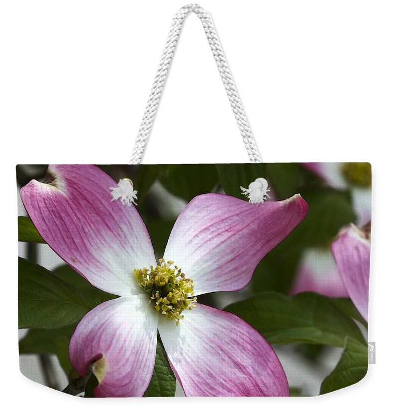 Cornus Florida Weekender Tote Bag featuring the photograph Pink Dogwood Blossom Up Close by Kathy Clark