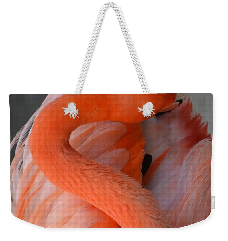 Pink Flamingo Weekender Tote Bag featuring the photograph Pink Flamingo by Robert Meanor