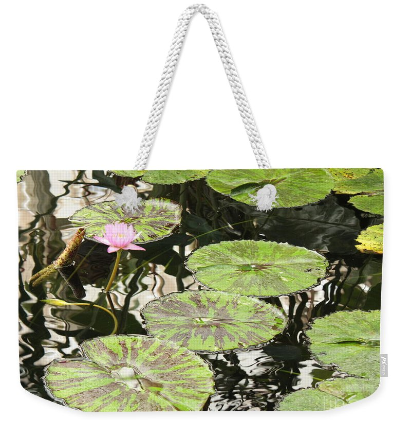 Pond Weekender Tote Bag featuring the photograph One Pink Water Lily With Lily Pads by Carol Groenen