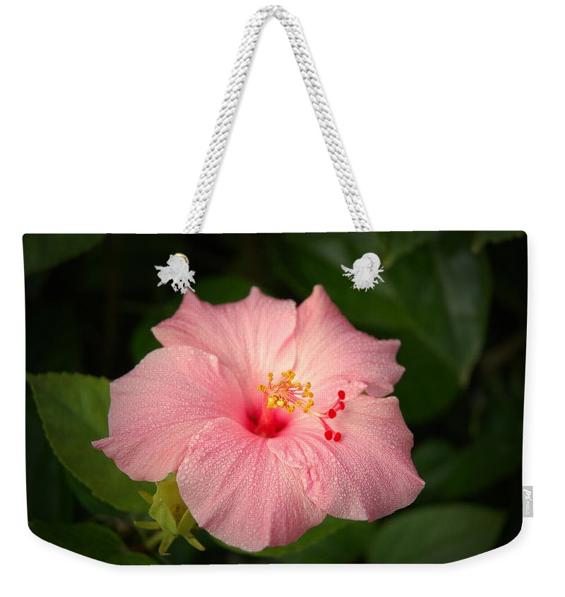 Hibiscus Weekender Tote Bag featuring the photograph Pink Hibiscus by David Weeks