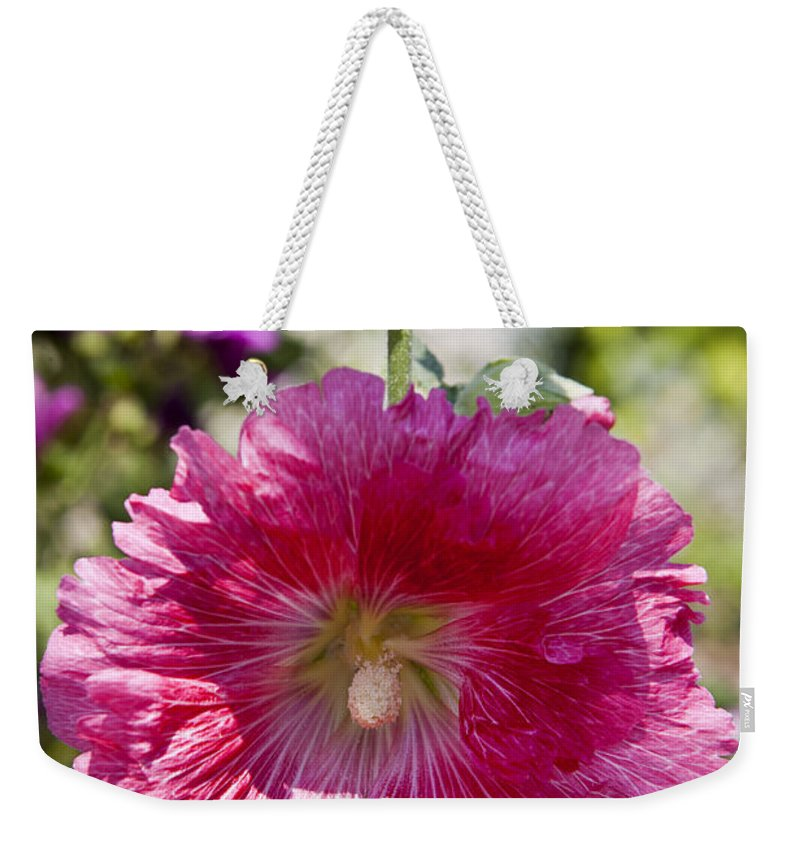 Hollyhock Weekender Tote Bag featuring the photograph Pink Hollyhock by Jason O Watson