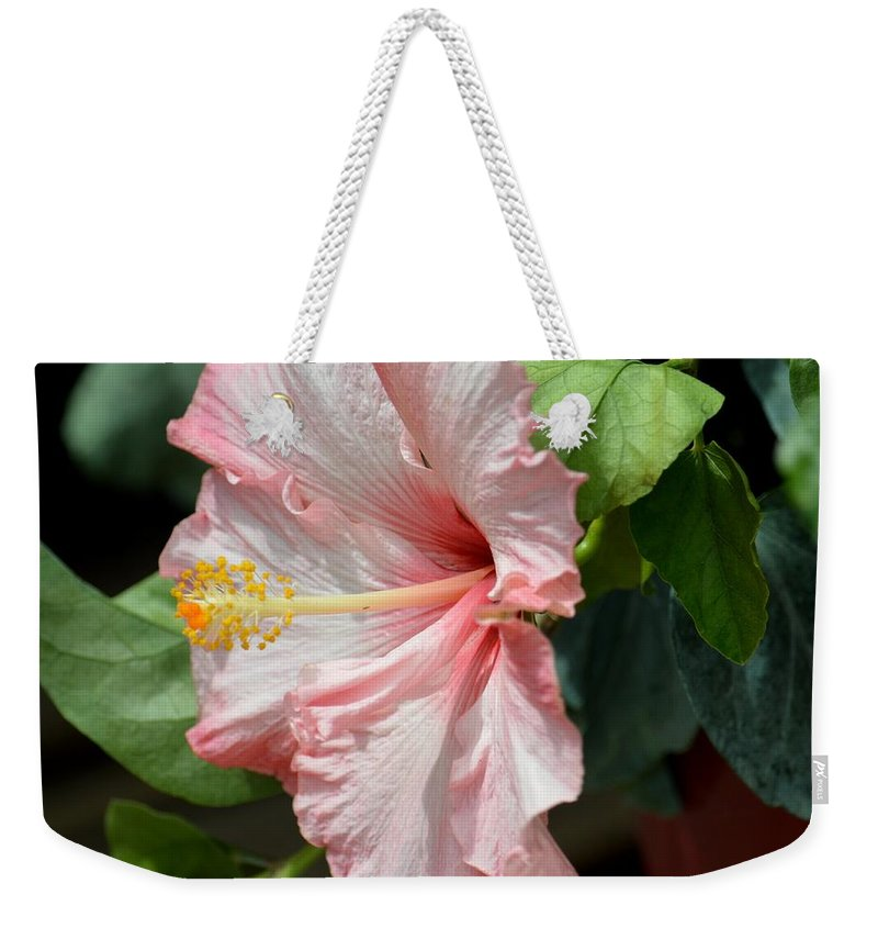 Pink Lady 2013 Weekender Tote Bag featuring the photograph Pink Lady 2013 by Maria Urso