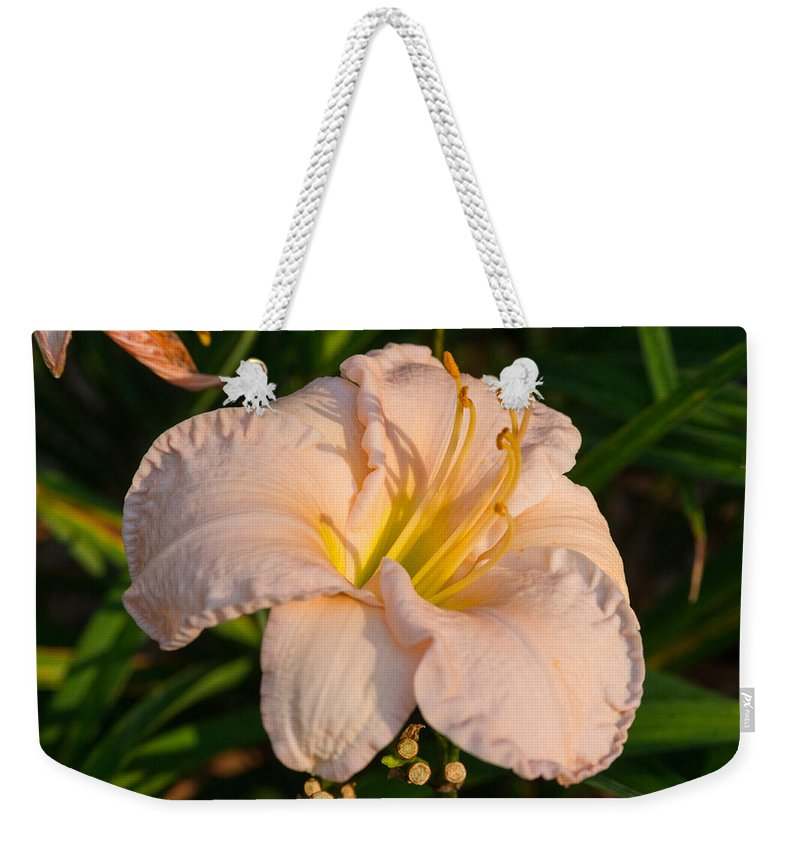 Lily Weekender Tote Bag featuring the photograph Pink Lily At Sunset 1 by Douglas Barnett