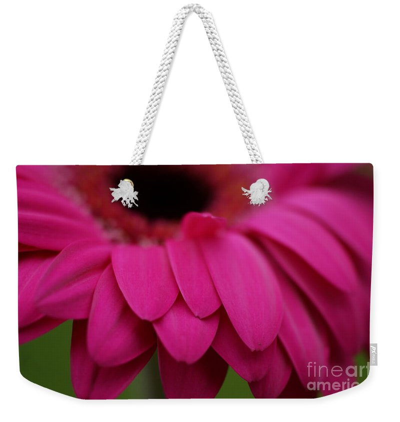 Pink Weekender Tote Bag featuring the photograph Pink Petals by Carol Lynch