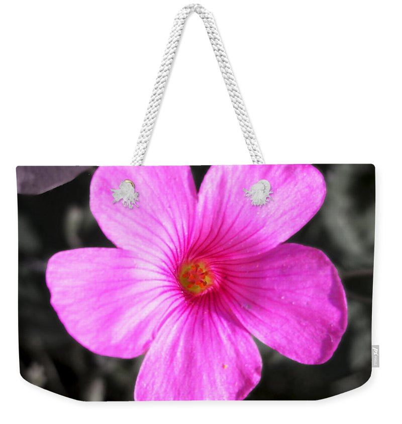 Flower Weekender Tote Bag featuring the photograph Pink Phlox by Nina Ficur Feenan