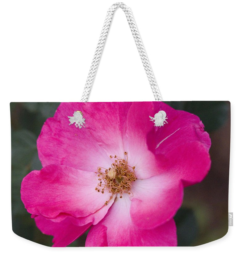 Rose Photographs Weekender Tote Bag featuring the photograph Pink Pink by Vernis Maxwell
