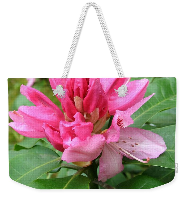Rhododendron Weekender Tote Bag featuring the photograph Pink Rhododendron Bud by Christiane Schulze Art And Photography