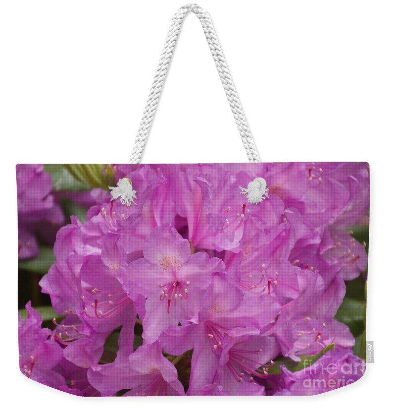 Rhododendron Weekender Tote Bag featuring the photograph Pink Rhododendron by William Norton