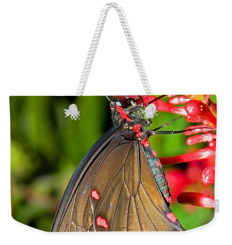 Pink Rose Butterfly Weekender Tote Bag featuring the photograph Pink Rose Butterfly by Millard H. Sharp