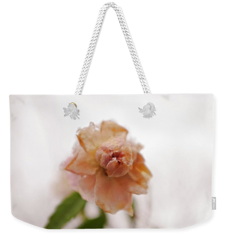 Pink Weekender Tote Bag featuring the photograph Pink Rose In Snow by Sharon Popek