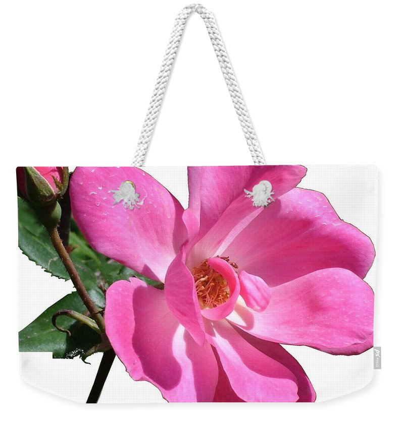 Pink Weekender Tote Bag featuring the photograph Pink Rose With Bud by Geoffrey McLean
