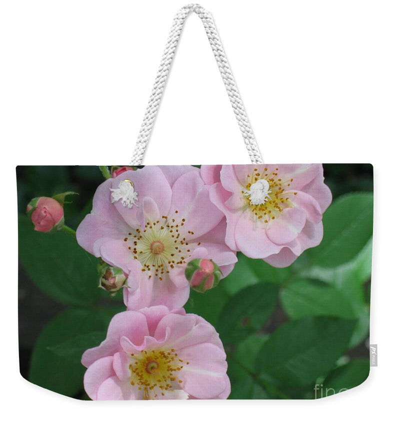 Knockout Roses Weekender Tote Bag featuring the photograph Pink Roses by HEVi FineArt
