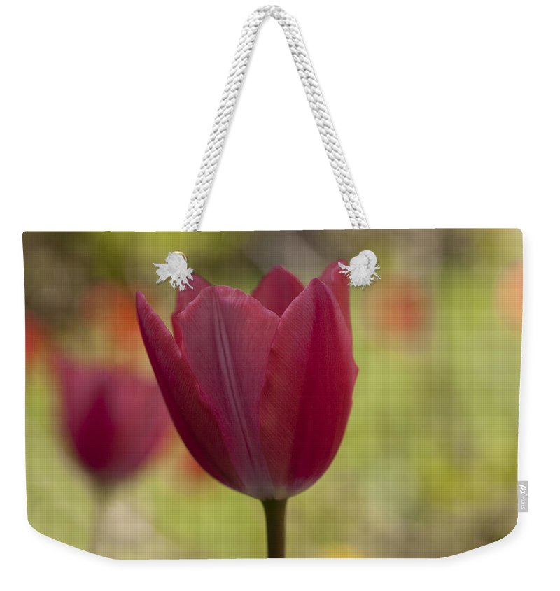 Tulip Weekender Tote Bag featuring the photograph Pink Spring by Eunice Gibb