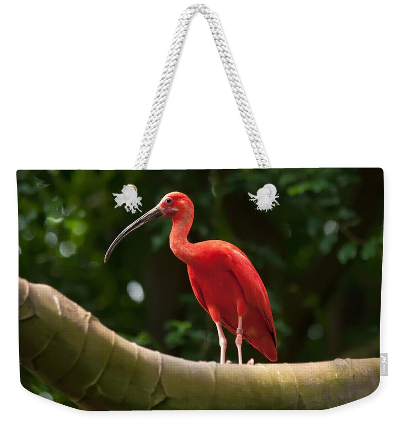Animal Weekender Tote Bag featuring the photograph Pink Tropical Bird by Alex Grichenko