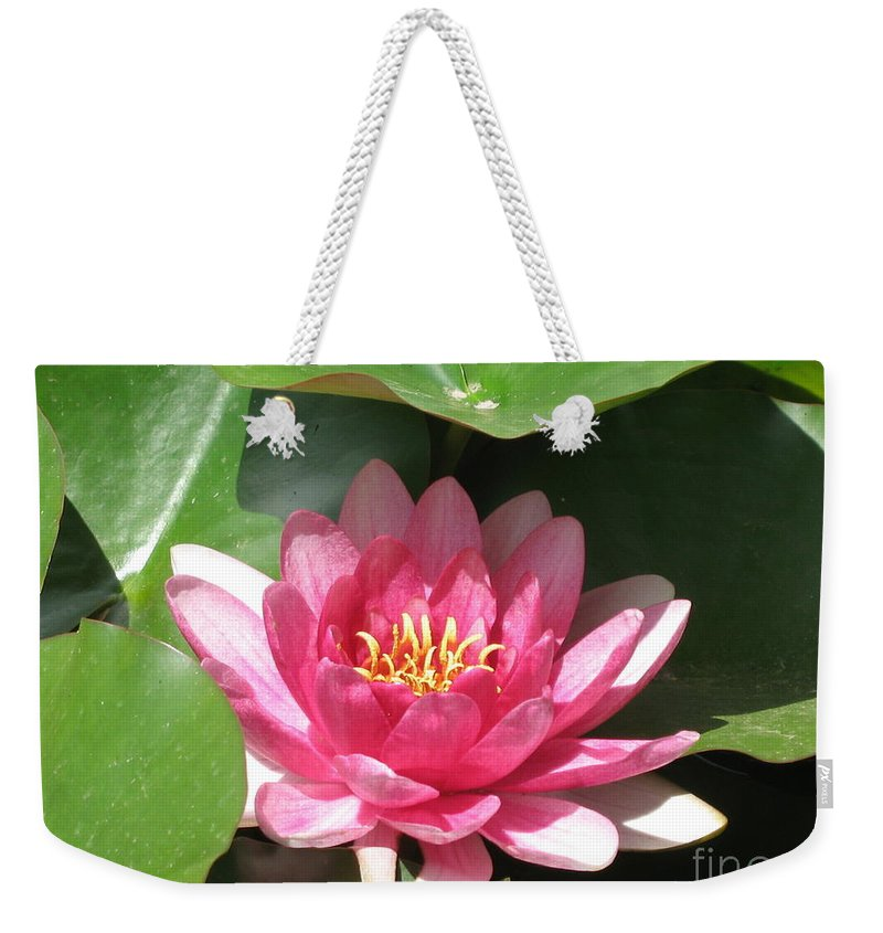 Waterlily Weekender Tote Bag featuring the photograph Pink Waterlily by Christiane Schulze Art And Photography